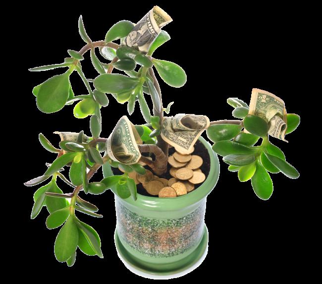 jade plant money